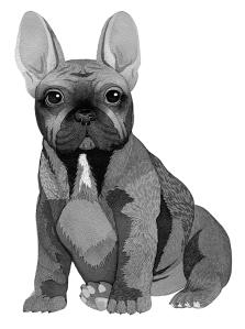 frenchbulldog_small