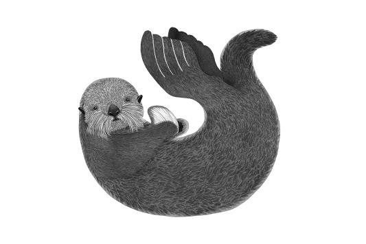 Sea Otter, ink 2016